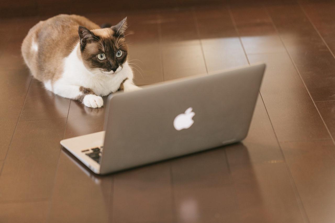 多くの人にサイトを見てもらう方法!コレ大事。
